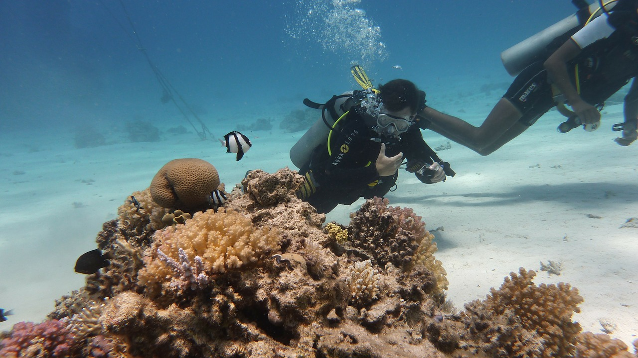 Diving people underwater among corals and fish